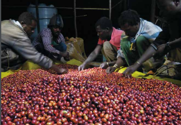 Kafea etiopian